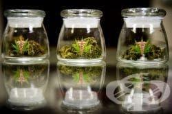 Времева линия, описваща значението на медицинската марихуана, от 2000 до 2007 - изображение