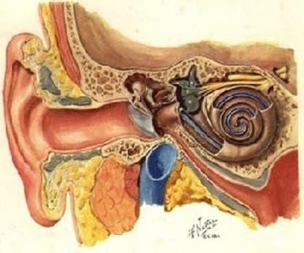 Знания от древността до 19 век, разказващи за заболяванията на ушите, носа и гърлото  - изображение