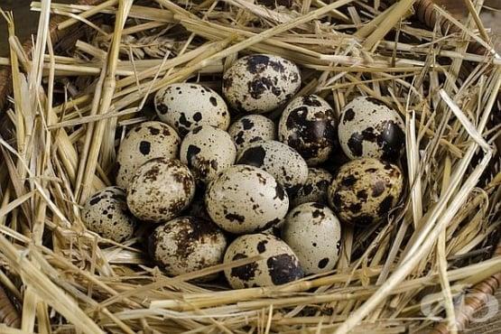 Защо са полезни пъдпъдъчите яйца и как да ги приемаме - Първа част - изображение
