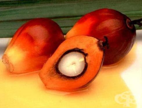 Червено палмово масло помага в борбата с диабета - изображение