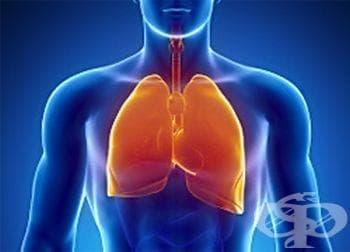 С какво да храним белите дробове - изображение