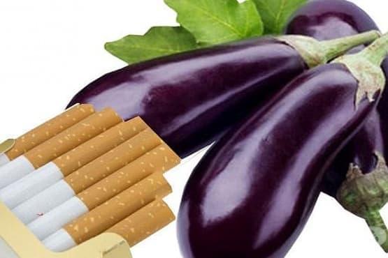 Хранителни продукти, съдържащи никотин - изображение