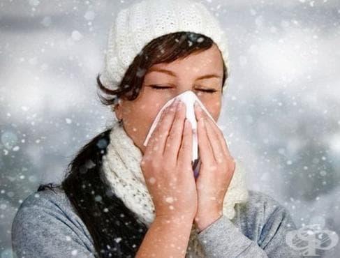 Хранителни продукти, които се борят с простудата и повишават имунитета - изображение