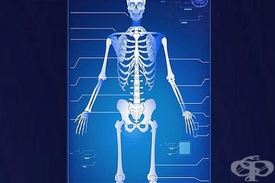 Как да храним костите - изображение
