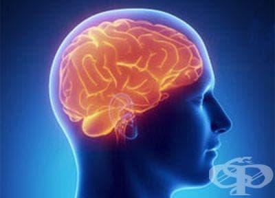 Как да храним мозъка - изображение
