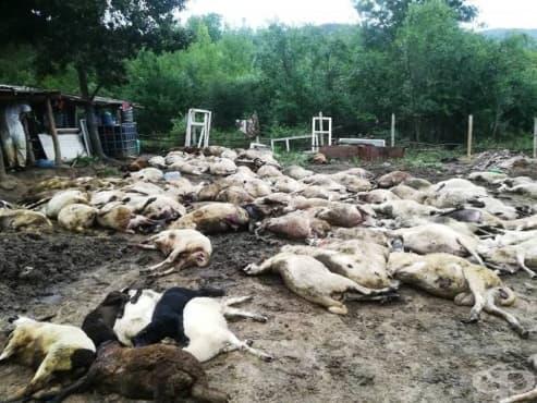 На какво мнение сте за принудителното избиване на животни в засегнатите от епидемията райони?
