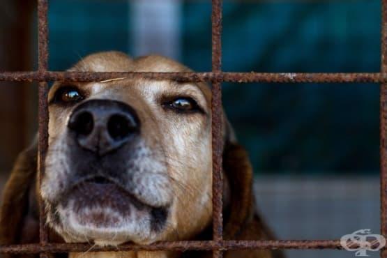 Как да се справим с проблема с бездомните кучета и котки? - изображение