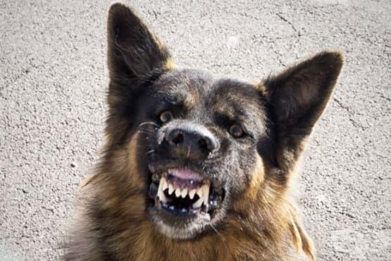 Страхувате ли се от агресивни бездомни кучета?