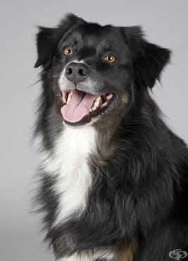 Солени глоби за собствениците на кучета над 5 килограма, без повод и намордник. Одобрявате ли идеята? - изображение