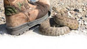 Радко Сертов: Змията не напада човек, за да го ухапе, а само и единствено при самозащита - изображение