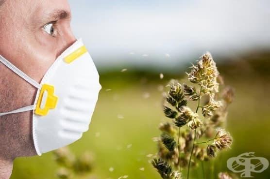 Алергичен ринит през поленовият сезон - възможности за контрол - изображение