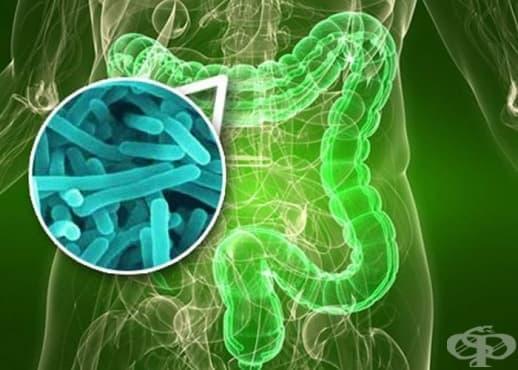Чревна микрофлора, пробиотици, пребиотици, антибиотици – как действат те - изображение