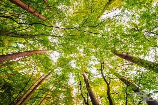 Личностен тест: Изберете дърво и разберете повече за себе си - изображение