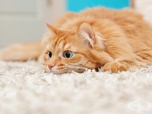 Как да разберете дали котката ви е стресирана и как да й помогнете - изображение
