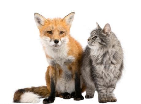 Притча за котката и лисицата - изображение