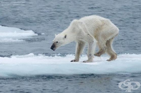 Шокираща фотография разкрива истината за промяната в климата - изображение