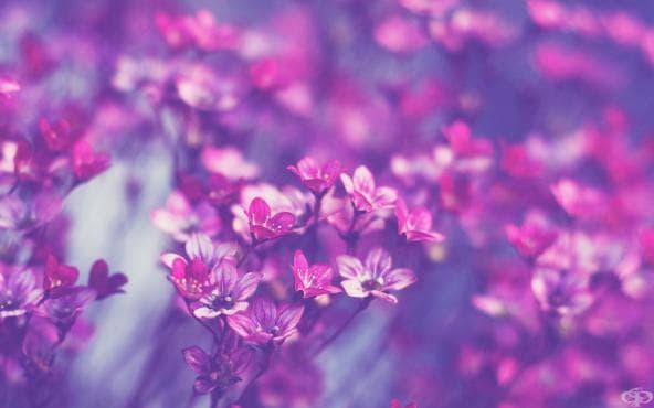 18 цитата за красотата - изображение
