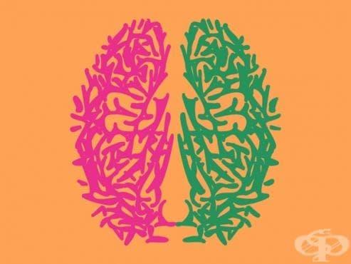 """Умението да говорим два езика променя """"архитектурата"""" на мозъка ни - изображение"""