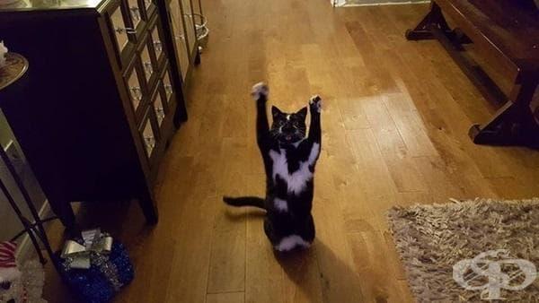 Запознайте се с котето, което обича да вдига лапичките си във въздуха - изображение