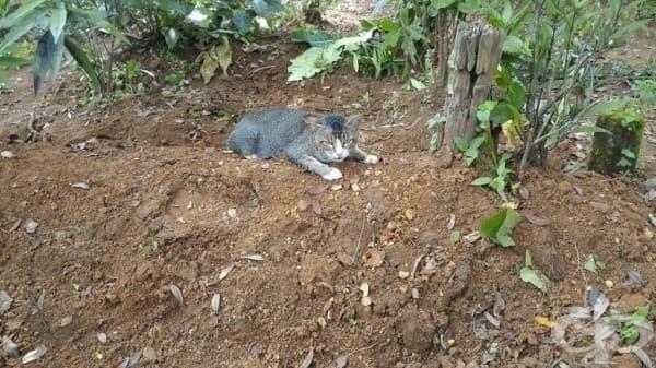 Котка с разбито сърце не се отделя вече 1 г. от гроба на стопанката си - изображение