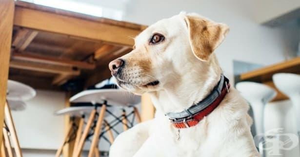 Списък с човешките храни, които кучето може и не може да яде - изображение