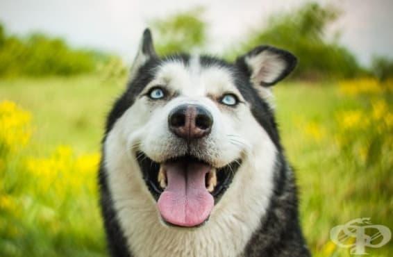 Учените твърдят, че сърцето на вашето куче бие в синхрон с вашето - изображение