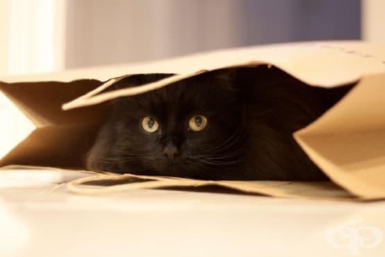 Еволюционните причини котките да са такива гадняри самотници - изображение