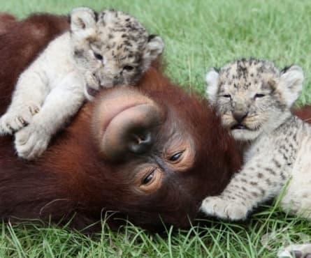 20 трогателни истории, които ще променят представите ви за животните – част 2 - изображение