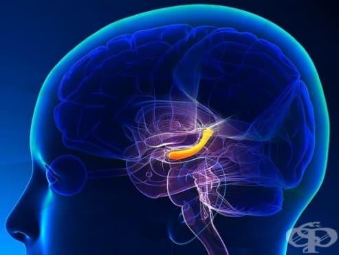 Тишината помага за генерирането на нови клетки в мозъка ни, според учените - изображение