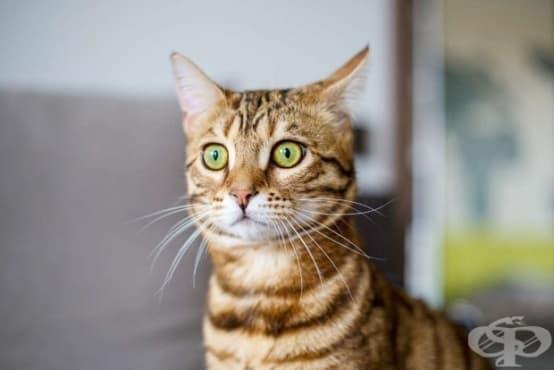 Най-накрая знаем какво означават котешките лицеви изражения  - изображение