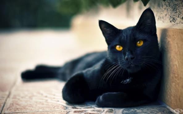 Котките са древни врагове на прогреса и цивилизацията, агенти на злото, които искат да разрушат живота ни - изображение