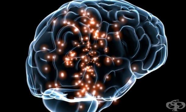 Ученето на втори език подобрява функцията на мозъка и забавя когнитивната дегенерация - изображение