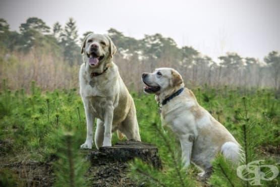 Как да тренираме кучето си да не бяга - изображение