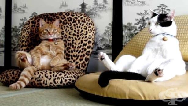 Хората и котките имат идентични мозъчни региони, отговарящи за емоциите - изображение