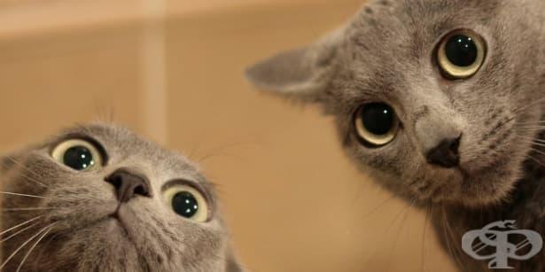 Защо котките правят това?! Някои странни поведения на котката обяснени - част 1 - изображение