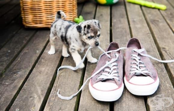 9 неща, с които стресираме кучето си - част 1 - изображение
