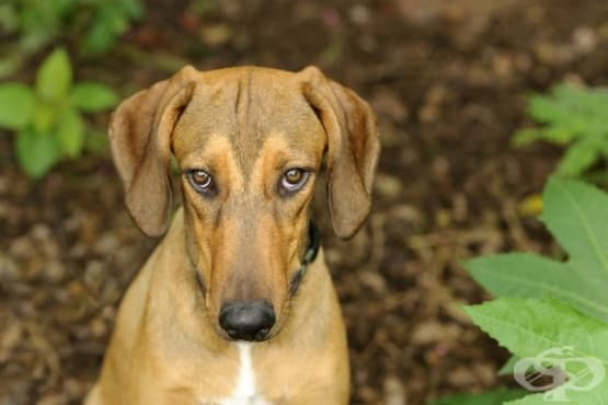 9 неща, с които стресираме кучето си — част 2 - изображение