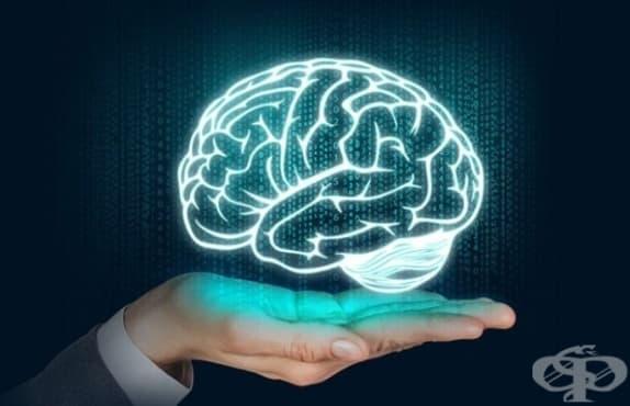 Очарователни и донякъде страховити факти, които не знаехте за мозъка си - част 1 - изображение