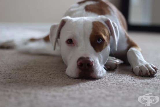 Жена предупреждава собствениците на кучета, след като губи любимеца си при нелеп инцидент - изображение