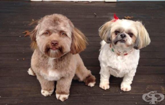 Йоги – кучето с човешко лице, което стана хит в социалните мрежи - изображение
