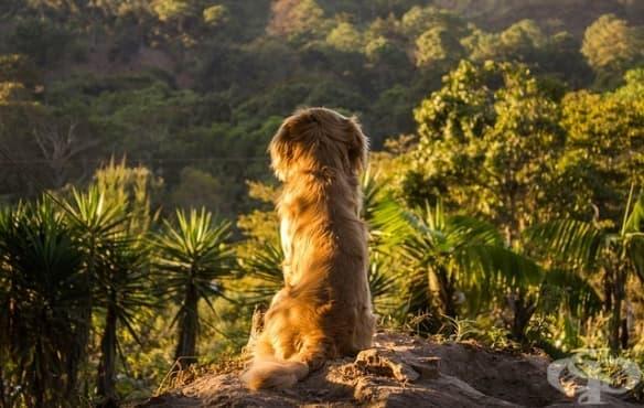 Кучетата и хората не са станали най-добри приятели за една нощ - изображение