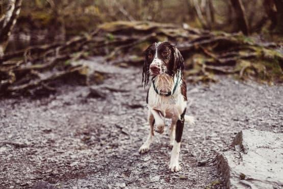 Кучетата знаят кога сте щастливи - изображение