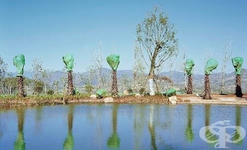 Транспортирането на дървета в Китай през погледа на един фотограф - изображение