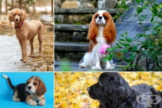 Най-подходящите породи кучета за интроверти - изображение