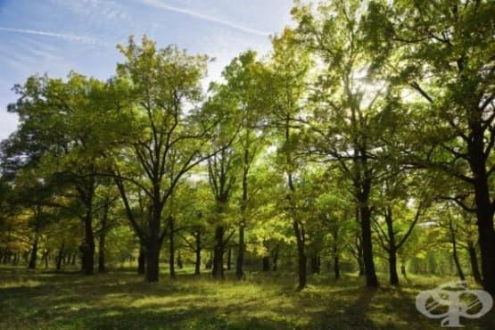 Защо холандските родители пускат децата си сами в гората - изображение