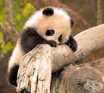 Уникални снимки на сладки бебета животни - част 3 - изображение
