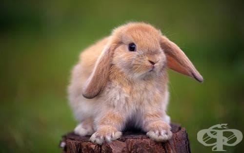 Какво трябва да знаем, преди да си вземем декоративно зайче за домашен любимец - изображение