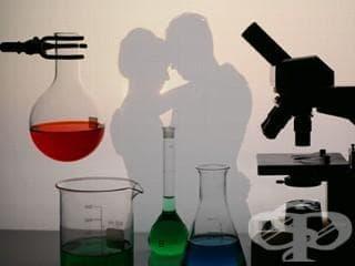 Каква е науката зад нашето влюбване? Къде обича нашият мозък? Влюбването стъпка по стъпка - изображение