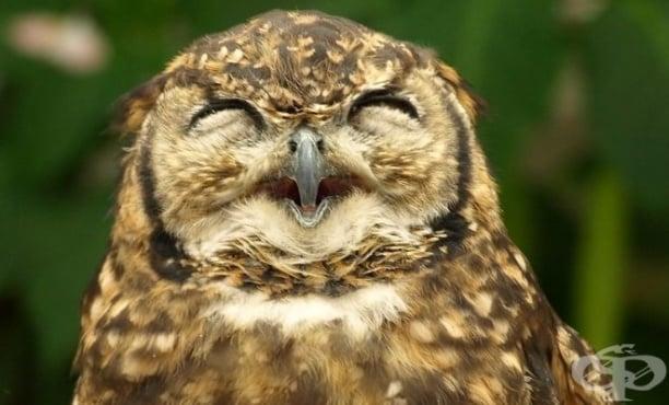 Совите не са това, което са, но смеещите се сови определено са ужасно смешни (Видео) - изображение