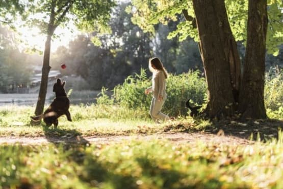 4 интересни дейности за вас и вашето куче - изображение